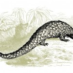 Roll with the pangolins, панголины, панголин, United for wildlife